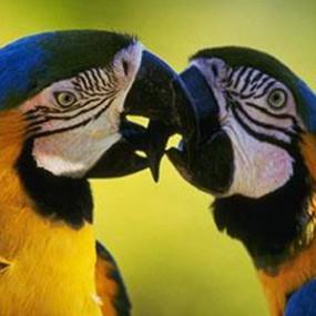 Exotic-Bird-Harness-Magic